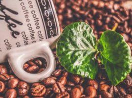 ¿el grano de café verde aumenta la presión sanguíneau