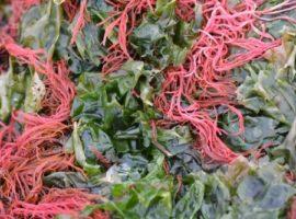 alimentacion de las algas rojas